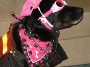 Service Dog, Biker Tinker