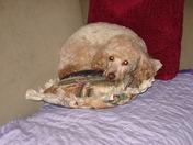 Hooch's Pillow