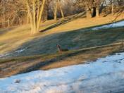 Deer watching me