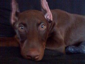 Handsome baby Anubis