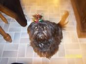 Sadie-Christmas Lady