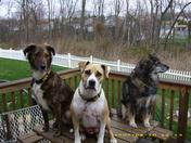 Dogs outside (7).JPG