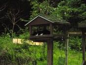cat nap in bird feeder
