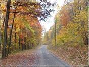 Bald Eagle State Forest Autumn Flaming Foliage