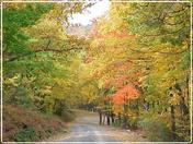 Autumn Flaming Foliage