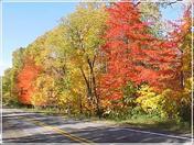 Autumn Roadside Flaming Foliage