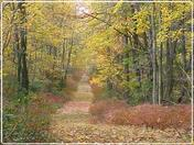 Autumn Woodland Trail