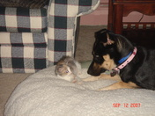 Macy and Bella getting aquainted