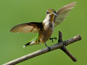 Hummer Two Step