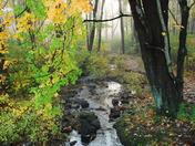 Fall Creek 08