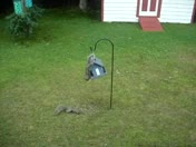 squirrel, birdfeeder