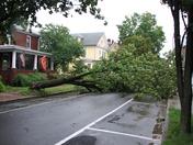 Tree down in Lewisburg