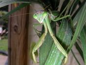 Alien on my patio?