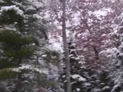 First Snow November 2009