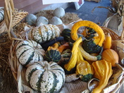 Fall offerings, Hallowell, Maine