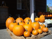 Before becoming Jack-O-Lanterns,  Hallowell,