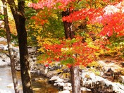 Brilliant Colors of Coos Canyon.JPG