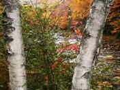 Autumn At Coos Canyon