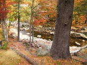 Autumn Serenity on Swift River, Me.JPG