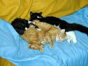 CINDY, MINDI, PUMPKIN TOGETHER ON COUCH.jpg