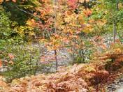 Natural Beauty of Autumn.JPG
