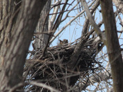 peeking over the nest