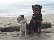 Hoffa & Lilly by the Sea