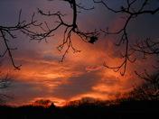 sunset nov 18 007.jpg