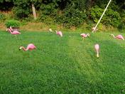 Sorentos Flocking 12