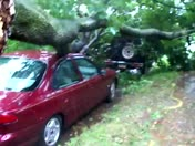 TREE FALLS ON CARS