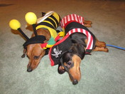 Chip & Pretzel Halloweened Out !