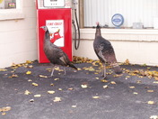 Wild life on Columbia Ave Lancaster Co. PA