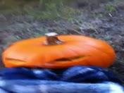 video of bernie the pumpkin man