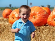 Picking out the Perfect Pumpkin!