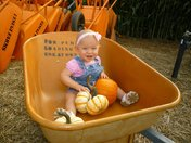 Perfect Pumpkin Patch Pick