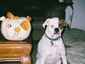 Jynco and his matching Pumpkin Contest Submission