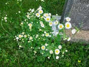 flowers at prospect hill cemetry