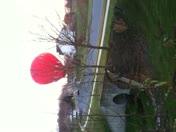 Ballon Ride Landing
