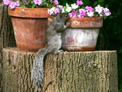 Mr. Squirrel taking time to smell the flowers!