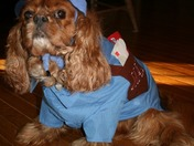 Baxter the Maildog!