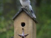 bird 079.JPG