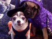 Mia and Aleister's spooky halloween!