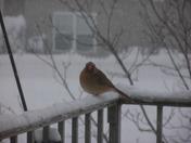 Birdie in snow