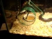 snake & mice 5