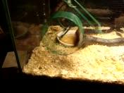 snake & mice 4