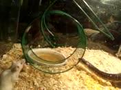 snake & mice 1