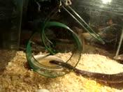 snake & mice 2