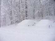 Did anyone see my car