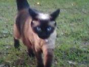 Woody Wud Peck Her My Cat.jpg