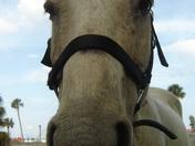 NEW HORSE 035.jpg